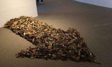 Mostra no Espaço Cultural Correios abre dia 21 de setembro, em celebração ao Dia da Árvore