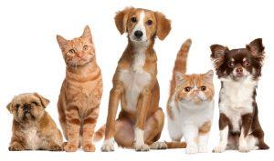 Niterói abre nesta sexta 660 vagas para castrar animais