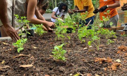 Niterói inaugura Horta Comunitária no Horto do Fonseca