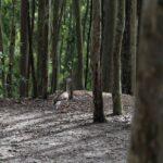 Tour virtual pelo Parque da Cidade, em Niterói, inclui 'salto' de parapente